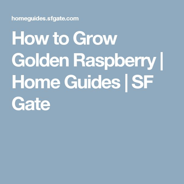 How to Grow Golden Raspberry | Home Guides | SF Gate