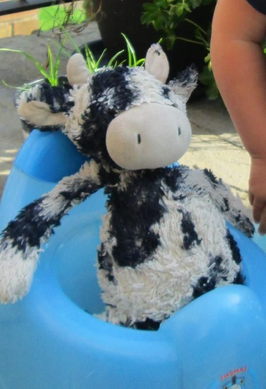Lost on 29 Sep. 2015 @ S11, Sheffield. My daughter lost her much loved jellycat cow somewhere between endcliffe park and the top of greystones. We'd love it back! Visit: https://whiteboomerang.com/lostteddy/msg/g0k06v (Posted by Rachel on 12 Oct. 2015)