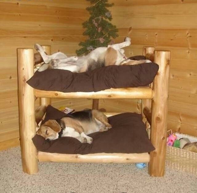 double decker pet bed so cute furry love pinterest
