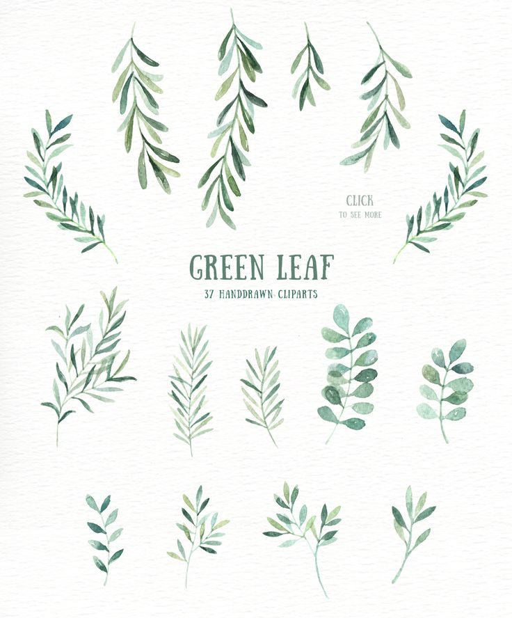 Green Leaf Watercolor clipart by everysunsun on @creativemarket