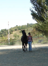 Adele Bonantini - Equitazione Naturale