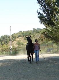 Adele Bonantini - Equitazione Naturale Milano Giorno e Notte - We Love You! www.milanogiornoenotte.com