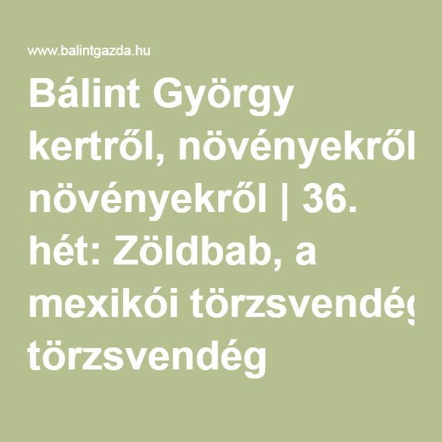 Bálint György kertről, növényekről | 36. hét: Zöldbab, a mexikói törzsvendég
