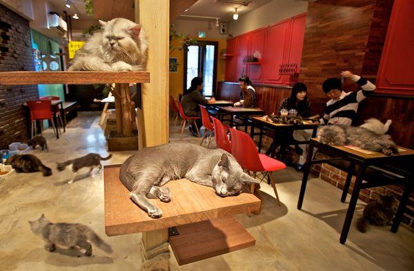 Au café des chats, on boit des coups en faisant des câlins à des chats. Adresse : 16 rue Michel Le Comte, 75003 Paris Site Web : http://www.lecafedeschats.fr