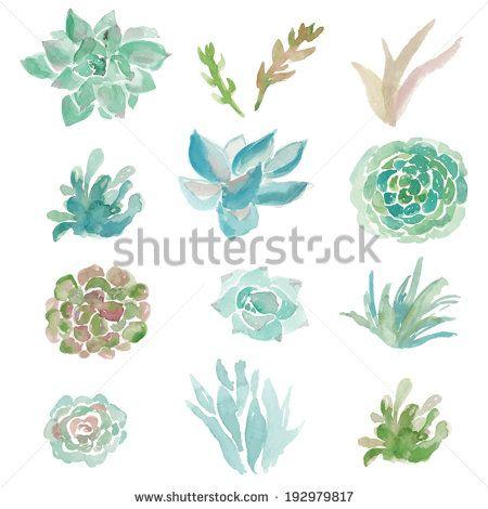 Watercolor Succulent Vector. Vector Plants. Vector Succulent Plants. Painted Succulent Plant Vector. Watercolor Vector.