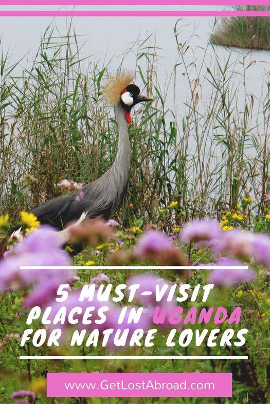5 must-visit places in Uganda for nature lovers   African wanderlust   Travel guide Uganda   Travel tips Uganda   Things to do in Uganda