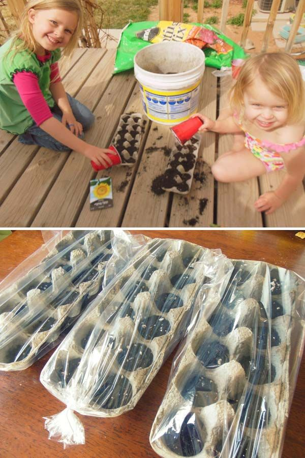 4. Fill the used egg cartons with some potting soil to plant the seeds, and then cover the containers with a plastic bag to create a lovely little greenhouse.   Fun Kids Gardening Projects To Do This Spring