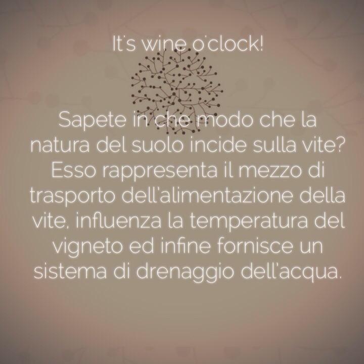 In che modo la natura del #suolo incide sulla #vite.  #SanMarzanoCantine #winelovers #wineoclock #wein #vinho #wine #vino #winetime