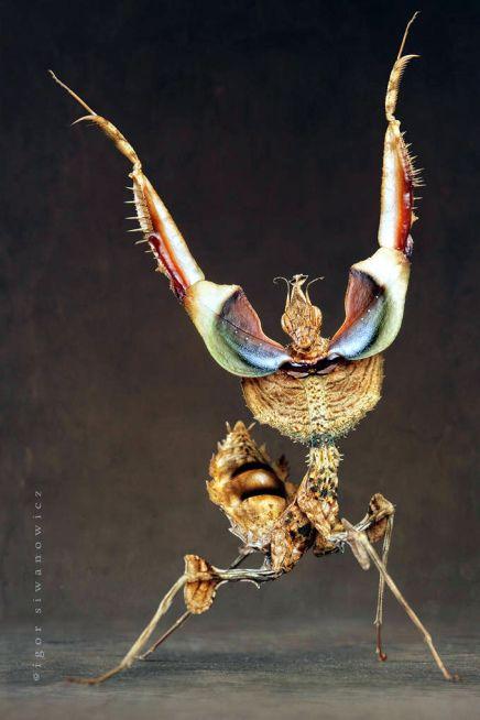 Aliens on Earth. Las Impresionantes y bellas fotografías de Igor Siwanowicz