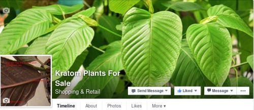 Kratom Plants For Sale | Facebook