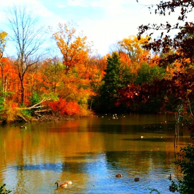 Fall in Ohio.: Ohio State