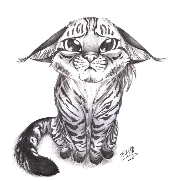 25 Best Ideas About Cat Drawing Tumblr On Pinterest