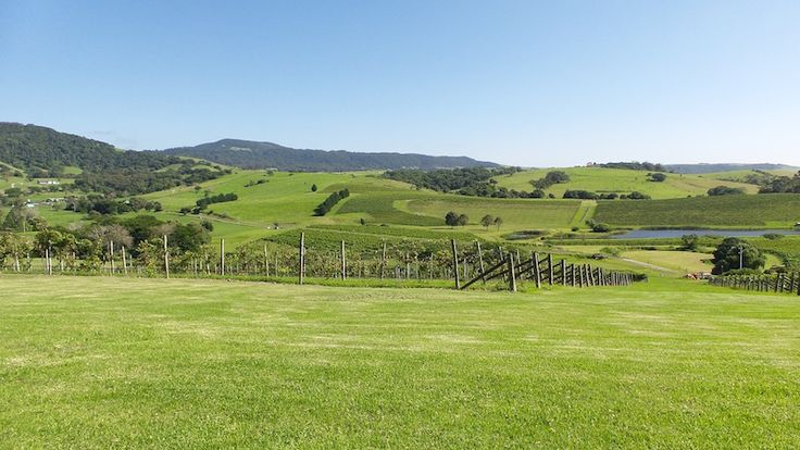 winery wedding, destination wedding, views of vineyard, great for wedding photography, NSW South Coast, Gerringong