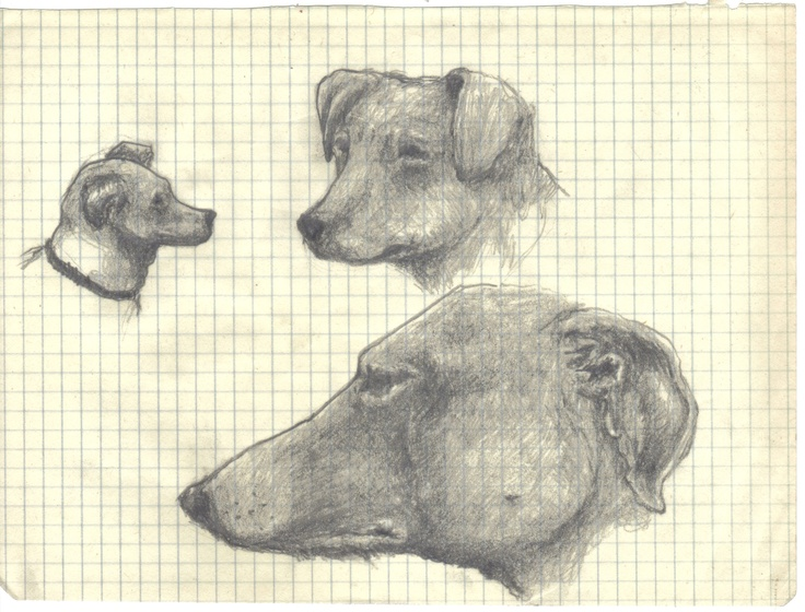 Dogs sketches
