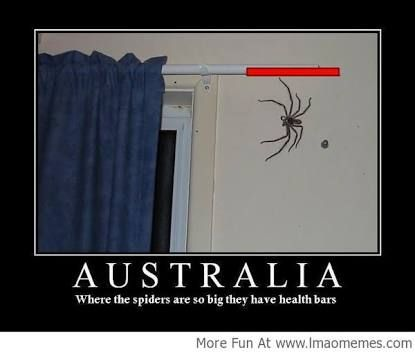 Image result for meanwhile in australia spider