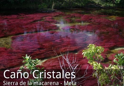 Resultados de la Búsqueda de imágenes de Google de http://www.caminantesdelretorno.com/eng/images/stories/destinos/cano-cristales-meta.jpg