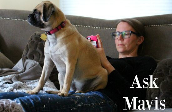 Ask Mavis - Raising Puppies, Indoor Solar Lights, Large Scale Gardening and More