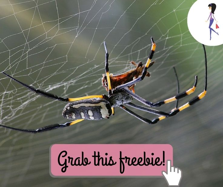 The best defense is to know your enemy! Get a free Spider Identification Chart with First Aid spider bite procedures and always be prepared.