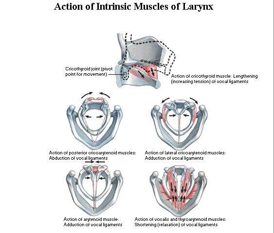 50 best Anatomy & physiology speech images on Pinterest | Speech ...