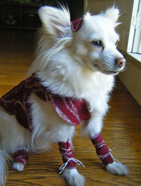 The 25 best halloween dog costumes images on pinterest dog diy doggy gaga meat outfit solutioingenieria Image collections
