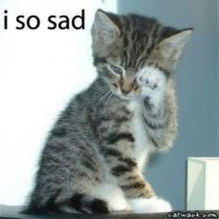 17 Best images about Sad cats on Pinterest | Sad kitty ...