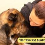 Bo The Stray Dog Survived For 7 Months. Where They Found Him? Heartbreaking! (Video) Bo, a rare type of Azores Cattle breed, was left in a local car w ..  http://www.dogisto.com/bo-stray-dog-survived-7-months-where-they-found-him-heartbreaking-video/