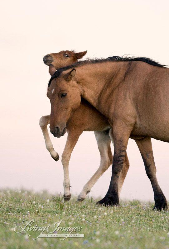 Foal Dances