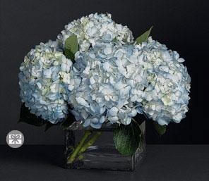 Blue,Hydrangea,Arrangement