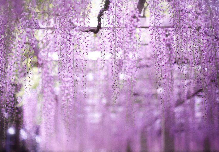 68 best lavender gray powder blue images on pinterest