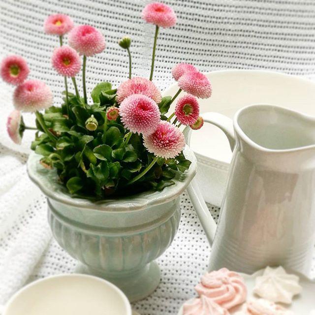 Ale się dzisiaj kotłasi pogoda. Raz grad, raz deszcz, a raz słońce. U was tak samo? #pompondaisy #daisy #flower #flowerslovers #englishhome #pinkflowers #minty #shabbystyle #shabby