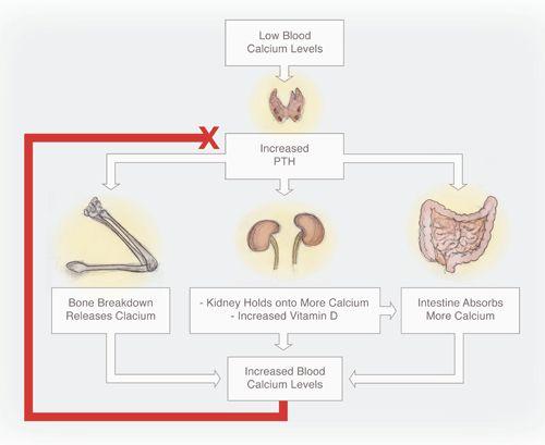 فيتامين د تعريف بالغدة الدرقية ثاني