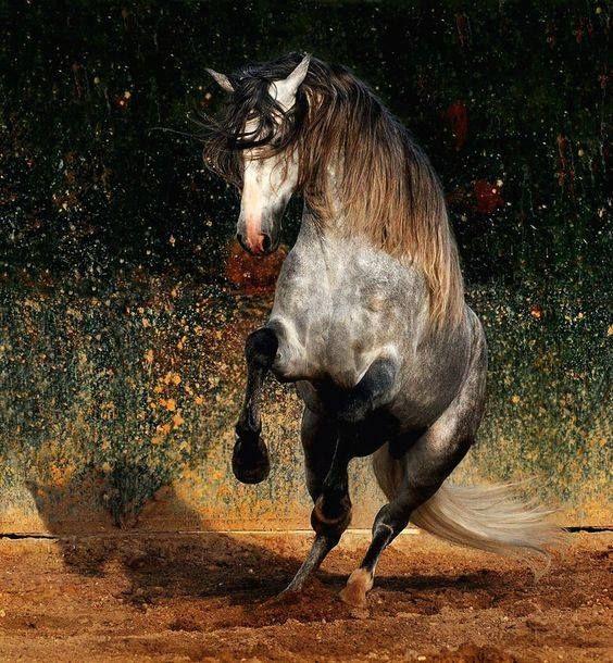 (92) Horses & Freedom - Home