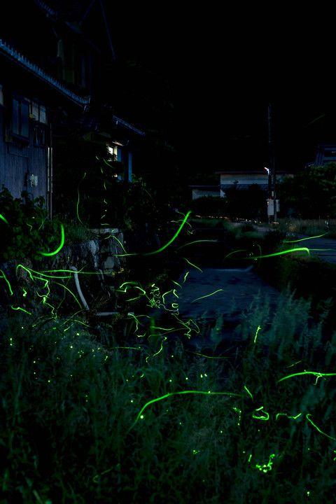 【夜遊び6日目】 ホームグランドの近所の小川を離れて滋賀県まで遠出。 あいにくの雨だったけど 初めてホタルの乱舞が見られてめちゃ嬉しい(*'▽'*) 楽しかった初めてのホタル撮りも そろそろシ-ズン終了です。 ※コンポジットなし