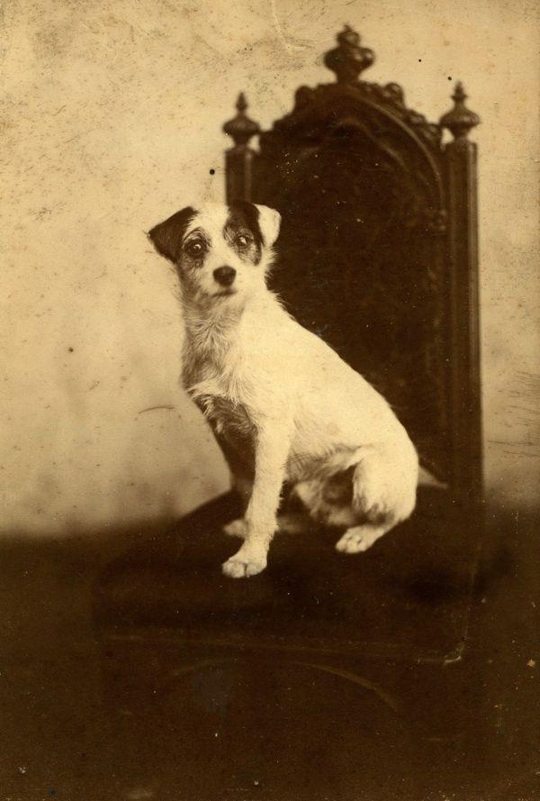 Cachorros da era vitoriana:  http://spitalfieldslife.com/2012/09/19/the-dogs-of-old-london/