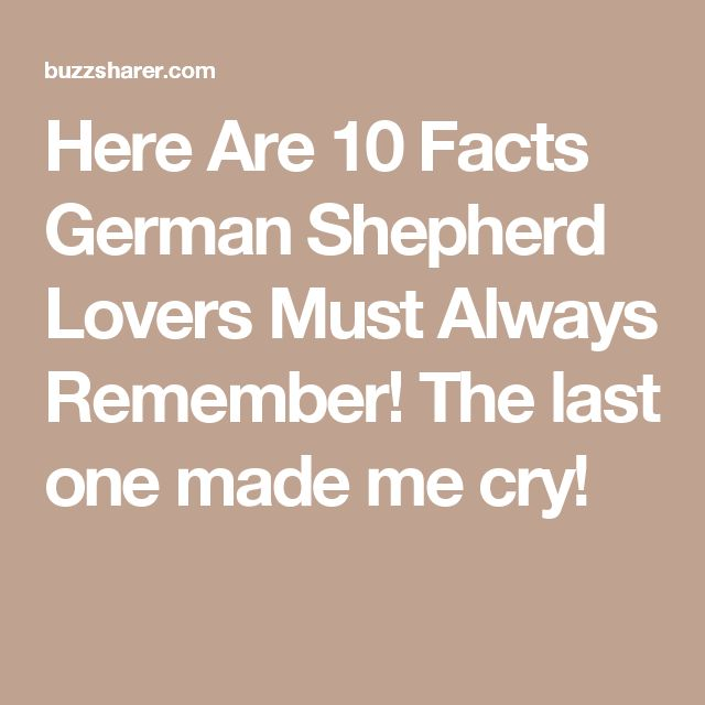Here Are 10 Facts German Shepherd Lovers Must Always Remember! The last one made me cry!