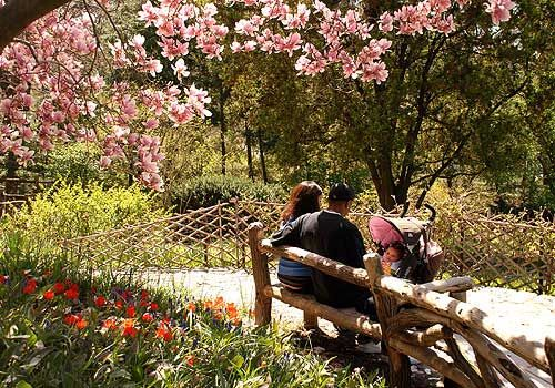 Must see the beautiful Shakespeare Garden in Central Park. Rent bikes but then park them and walk through the garden.