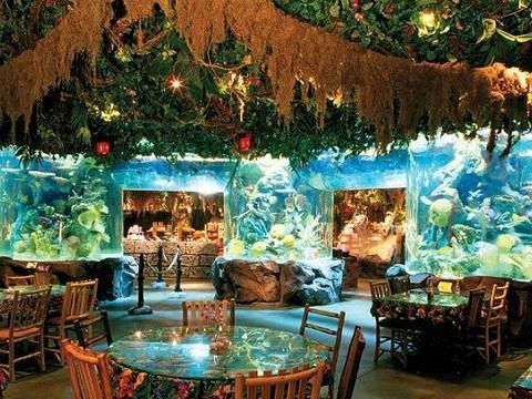 Rainforest Cafe at Downtown Disney® - American Cuisine in Orlando, Florida