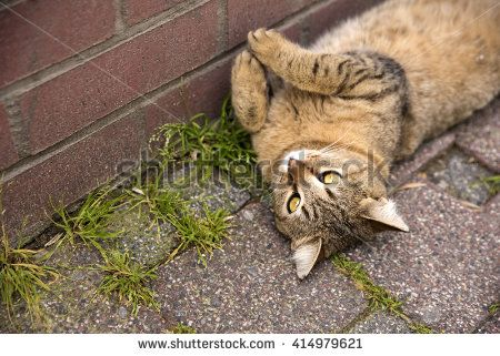 Playful cat lying on the ground