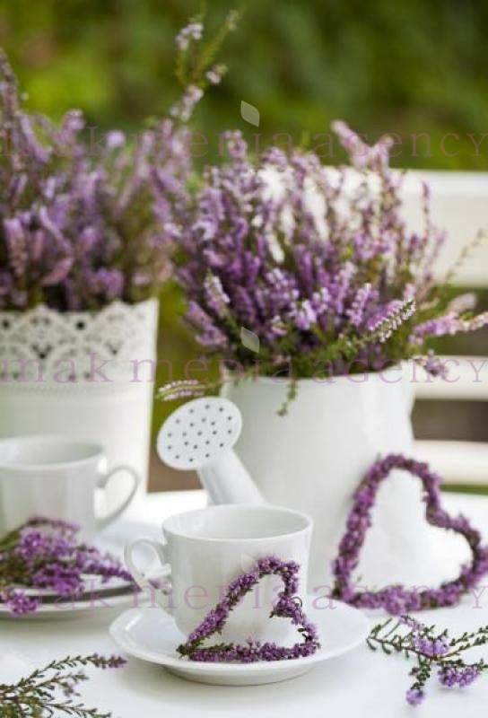 Lovely Lavender <3