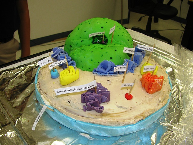 plant cell project 7th grade