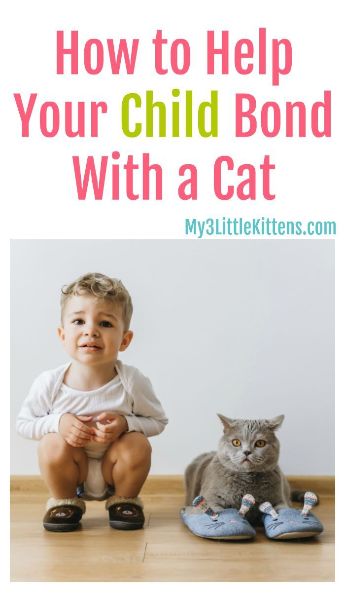 How To Help Your Child Bond With A Cat Getting A Kitten Little Kittens Kitten Care