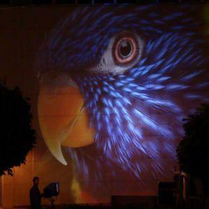 Night Projection fényfestés - munkában