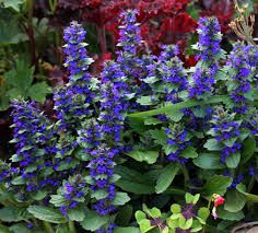 1) bugle flower