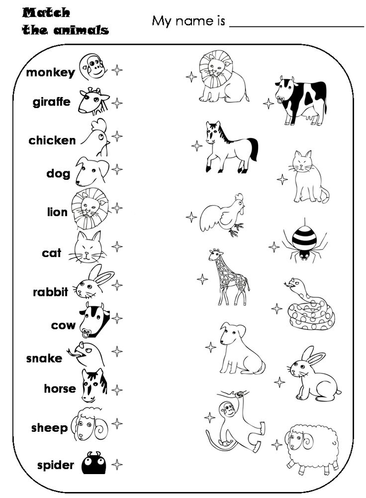 worksheets for preschoolers matching animals match the animals animal matching thinking. Black Bedroom Furniture Sets. Home Design Ideas
