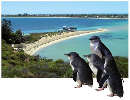 Enjoy a day visit to beautiful Penguin Island in Shoalwater Islands Marine Park - swim, snorkel, explore, watch little penguins being fed at the Discovery Centre or take a boat cruise to see dolphins and sea lions