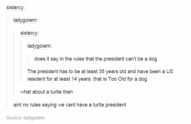 turtle for president 2016<<in all honestly if i could vote for a turtle i would,But! if Gerard Way runs i would have to go with him