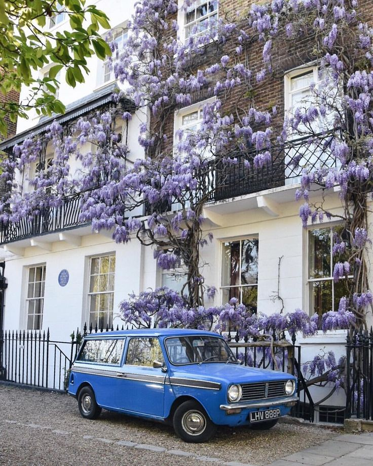 Chelsea, London.......Quite possibly the prettiest little scene in London right now. That blue car with the wisteria! …""