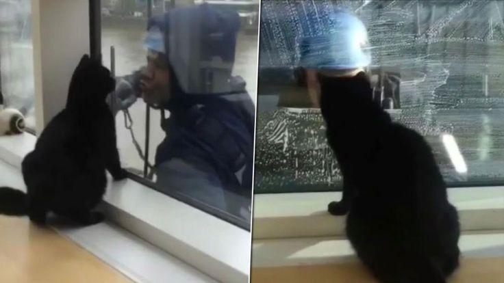 Er kann es gar nicht erwarten bis es wieder losgeht und die Fensterputzer vorbeikommen. Ein Kater im Hochhaus scheint völlig vernarrt zu sein in die Wischbewegungen der Arbeiter.
