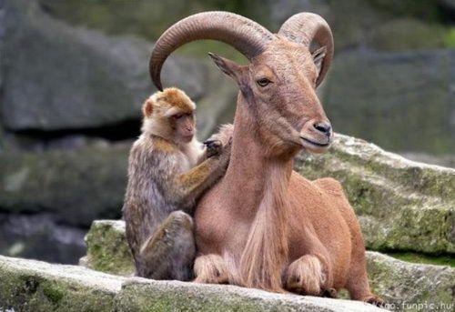 Animal Planet 5 – Unusual Animal Friends – DesignSwan.com