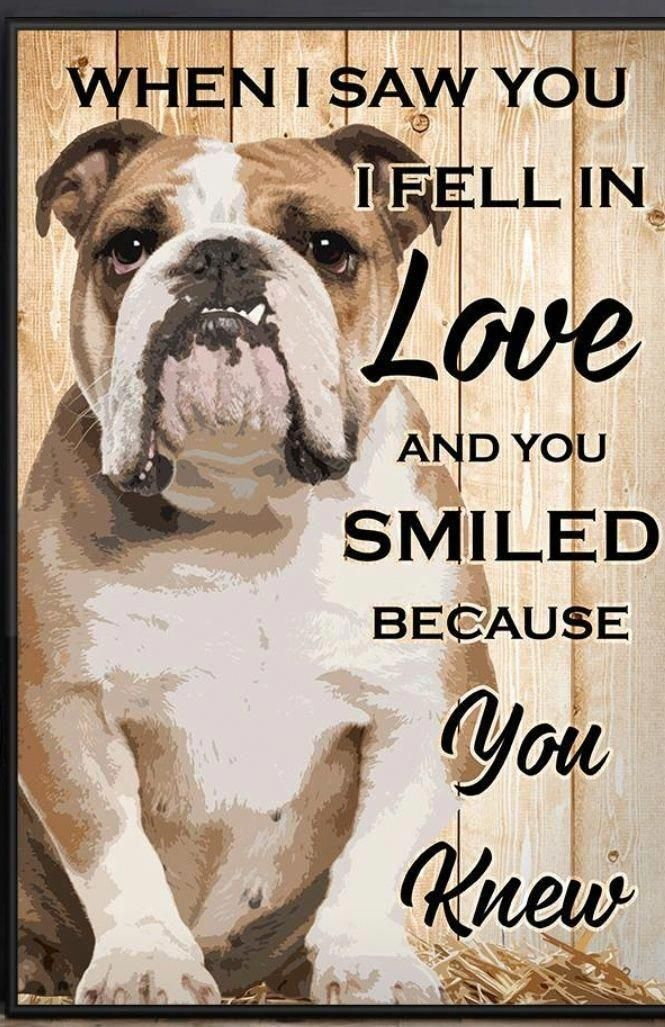 Pin By Connie Holbrook Shacklett On Bull Dog And Quotes Bulldog